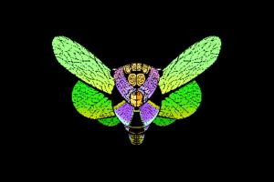 cicadus